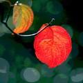 Photos: 葉も色ずく-2