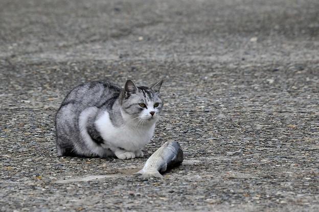 野良猫-1