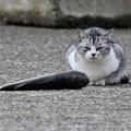 Photos: 野良猫-1