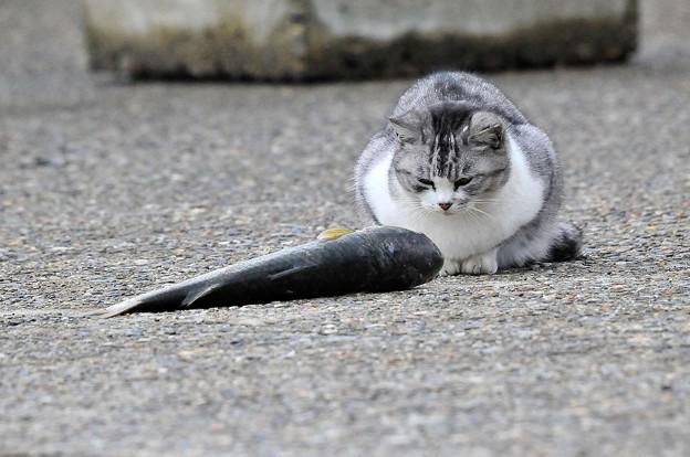 野良猫-2