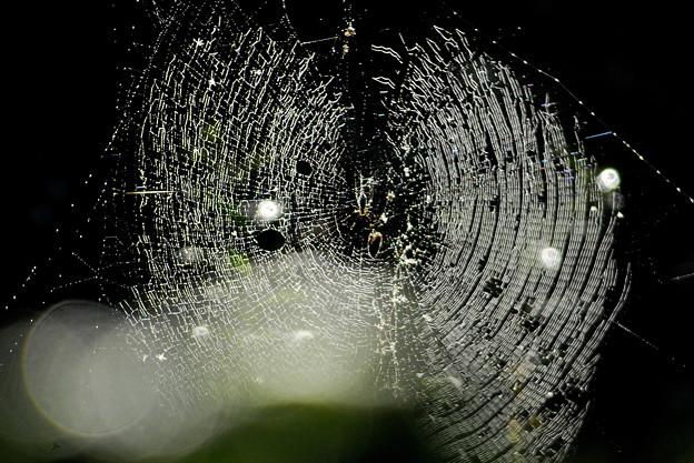 Photos: 蜘蛛の巣-1