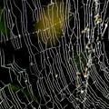 Photos: 蜘蛛の巣-2