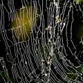 Photos: 蜘蛛の巣-4