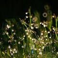 Photos: 草と輪と輪