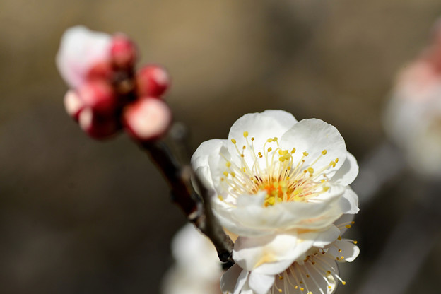 Photos: 春光(テスト)