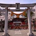 Photos: 世良田東照宮の桜1