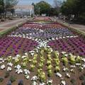 Photos: 花のプロムナード