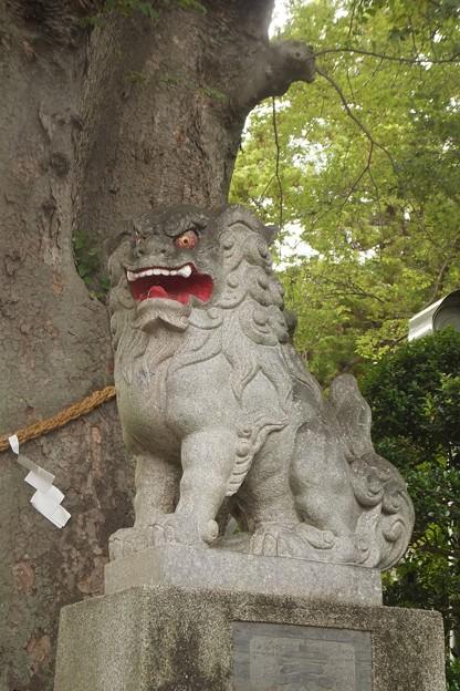 比々多神社狛犬(右)