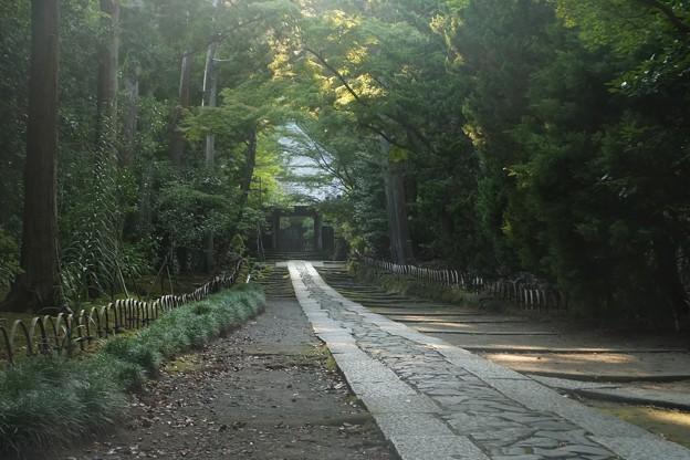 寿福寺参道/木洩れ日