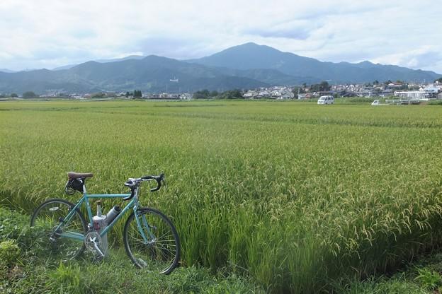 稲穂/大山