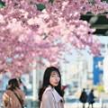Photos: 桜の樹の下で