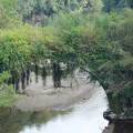 Photos: 草まみれの石橋三選3