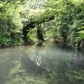 Photos: 高倉橋2