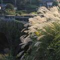 Photos: ススキと石橋