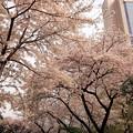 Photos: 高輪