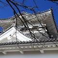 Photos: 館山城