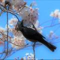 Photos: 春の誘い