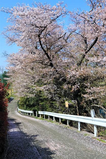 Photos: 花散らし