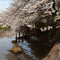 Photos: 花の舞い