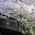 Photos: 目黒川