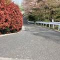 Photos: 桜坂