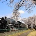 Photos: D51と桜