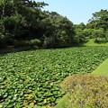 Photos: 夏の三溪園