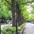 Photos: 山下公園通り