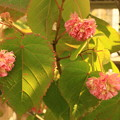 Photos: 熱帯花