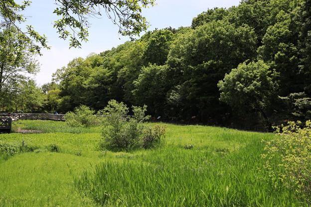 Photos: 緑の園