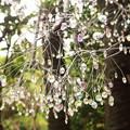 Photos: ガラスの葉