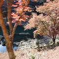 Photos: 保津川