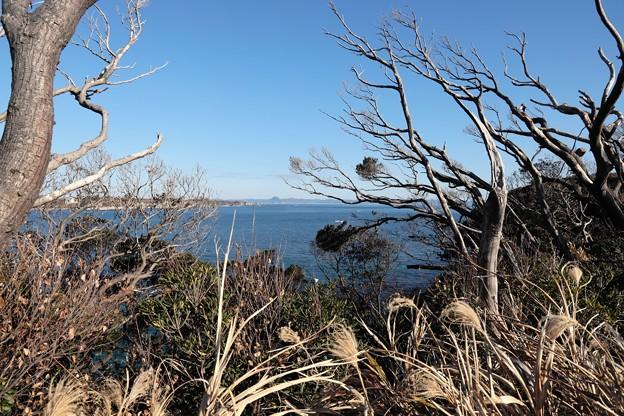 Photos: 湘南の風