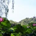 Photos: 夏風