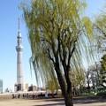 Photos: 微風