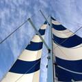 Photos: 帆を上げて