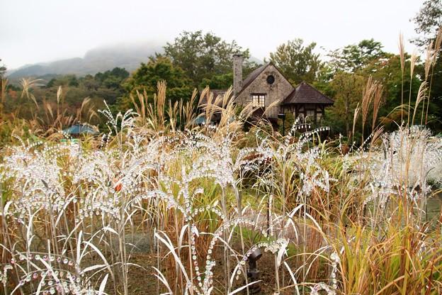 Photos: ガラスの森美術館