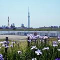 Photos: 堀切水辺公園