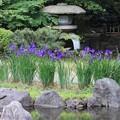 Photos: 日本庭園