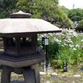 Photos: 堀切菖蒲園