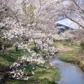 Photos: 忍野の清流