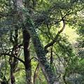 Photos: 森林