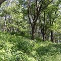 Photos: 四季の森