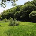 Photos: 緑の森