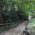 Photos: 森の歩道