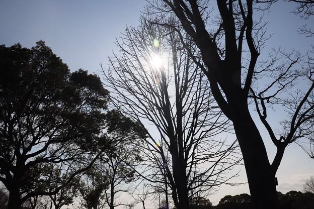 Photos: 冬日