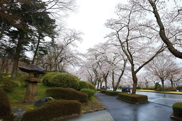 Photos: 春雨