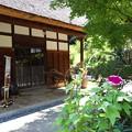 Photos: 朝顔の庭
