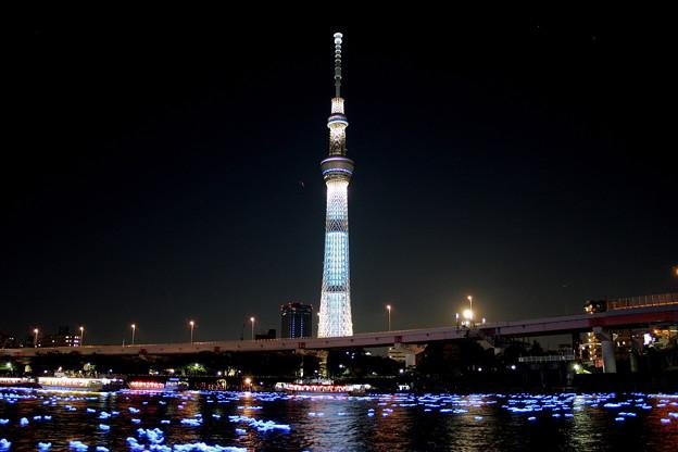Photos: 東京ホタル