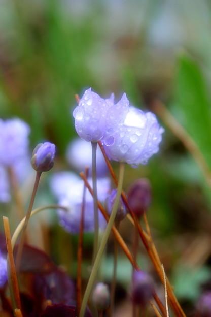 4月の雨に打たれて